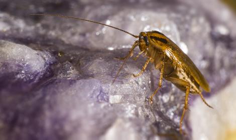kakkerlakken van dichtbij